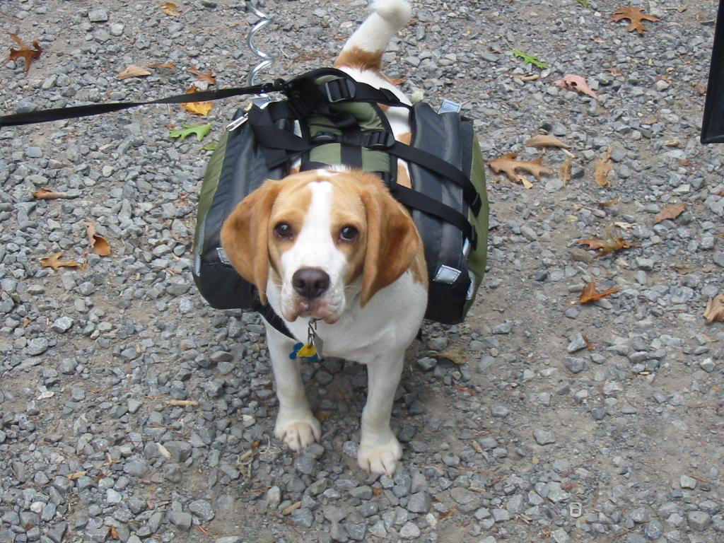 Backpacking Tennyson